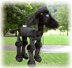black poodle animal marionette operating very